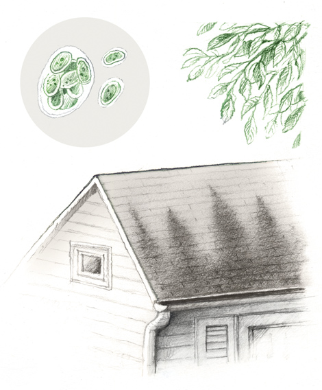 Black Streaks from Algae on Your Roof